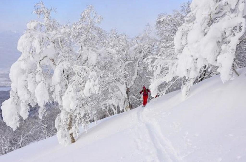 Japon - Hokkaïdo, la plus belle poudreuse du monde