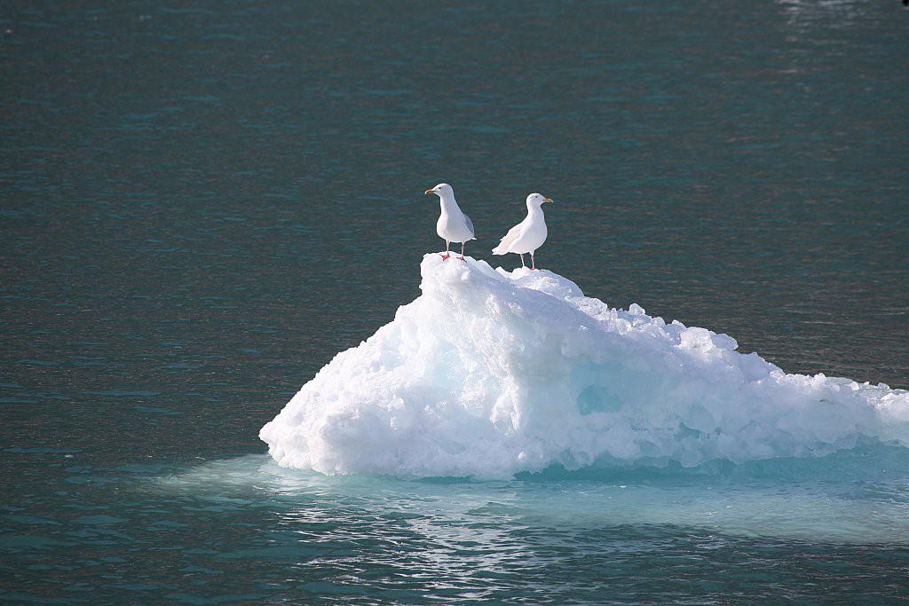 Groenland - Au départ d'un bateau, sur la côte Ouest