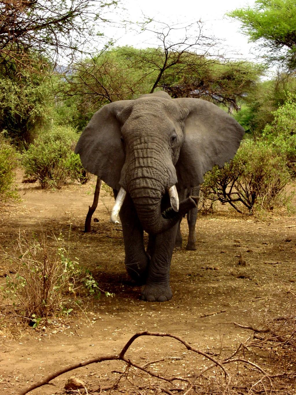 Tanzanie - Safari découverte et Zanzibar