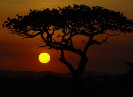 Tanzanie parcs et safari du nord - Les matins du monde