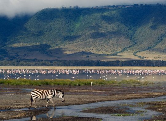 Tanzanie - Grande Migration Serengeti Mara