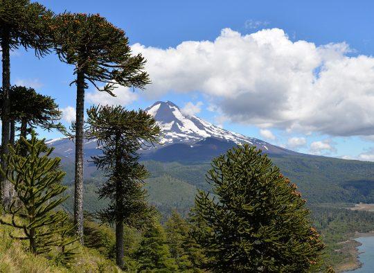 Les volcans d'Araucanie - Les matins du monde
