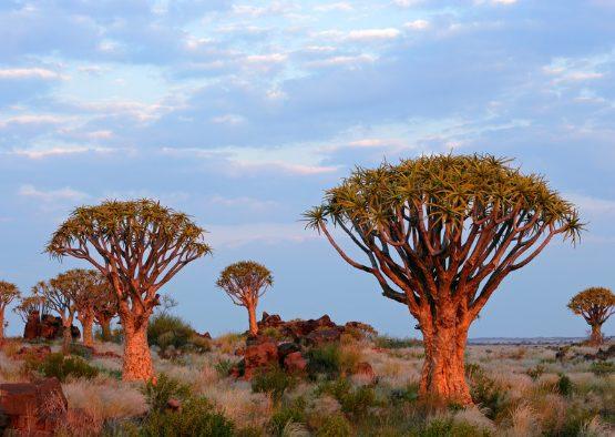 Découverte de la Namibie en Liberté - 16 jours - Les matins du monde
