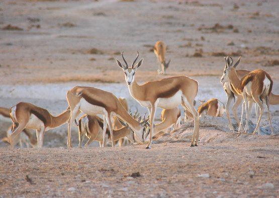 Essentiel de la Namibie - Les matins du monde