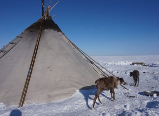 Russie - Ski de rando en Oural, au pays des Nénètses