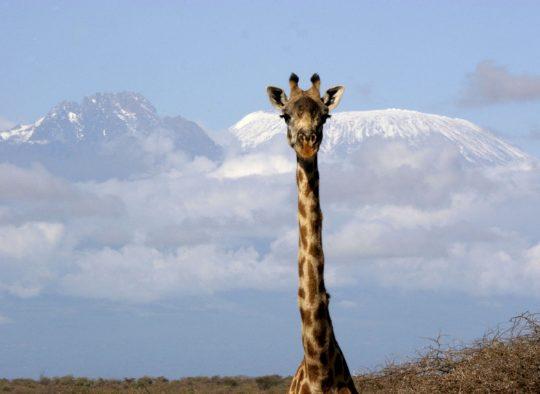 Tanzanie - Kilimandjaro par la voie Machame - Les matins du monde