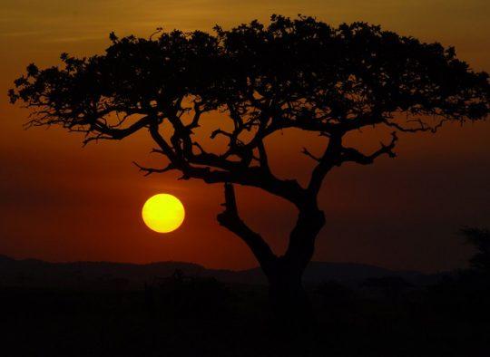 Tanzanie - Les Grands Parcs du Nord - Les matins du monde