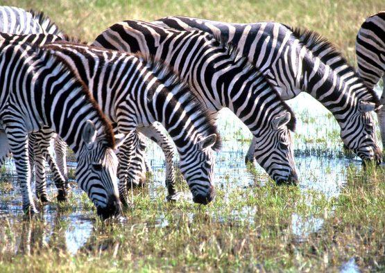 Botswana - Le grand Botswana