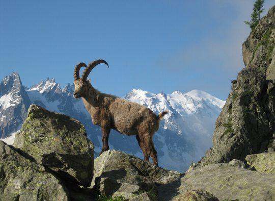 France - Chamonix - Zermatt en ski