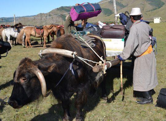 Immersion chez les pasteurs nomades mongols - Les matins du monde
