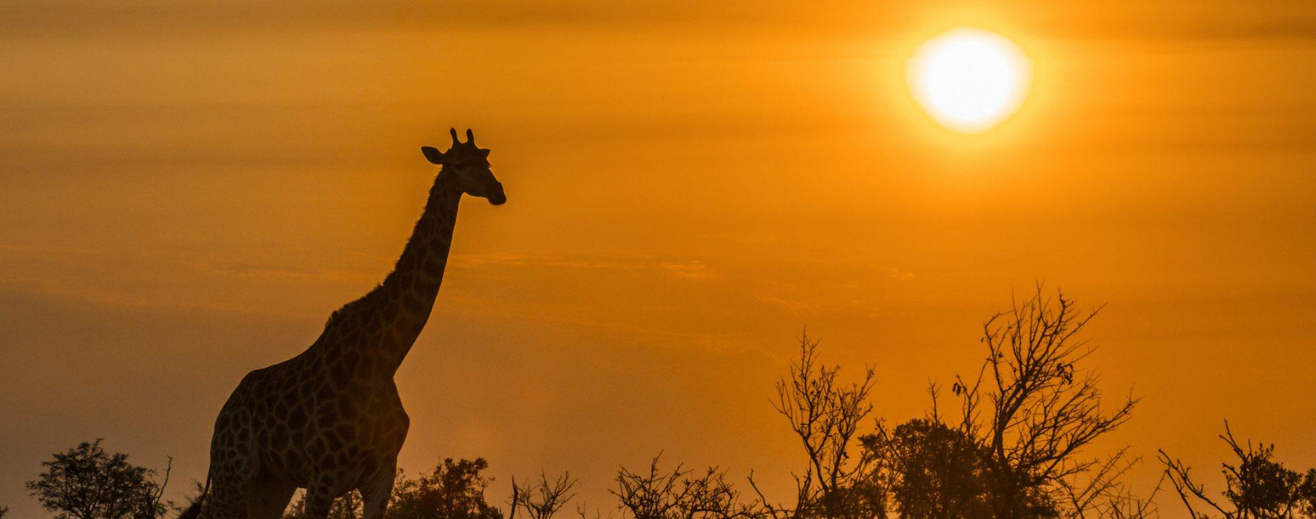 Afrique du Sud - Les Matins du Monde