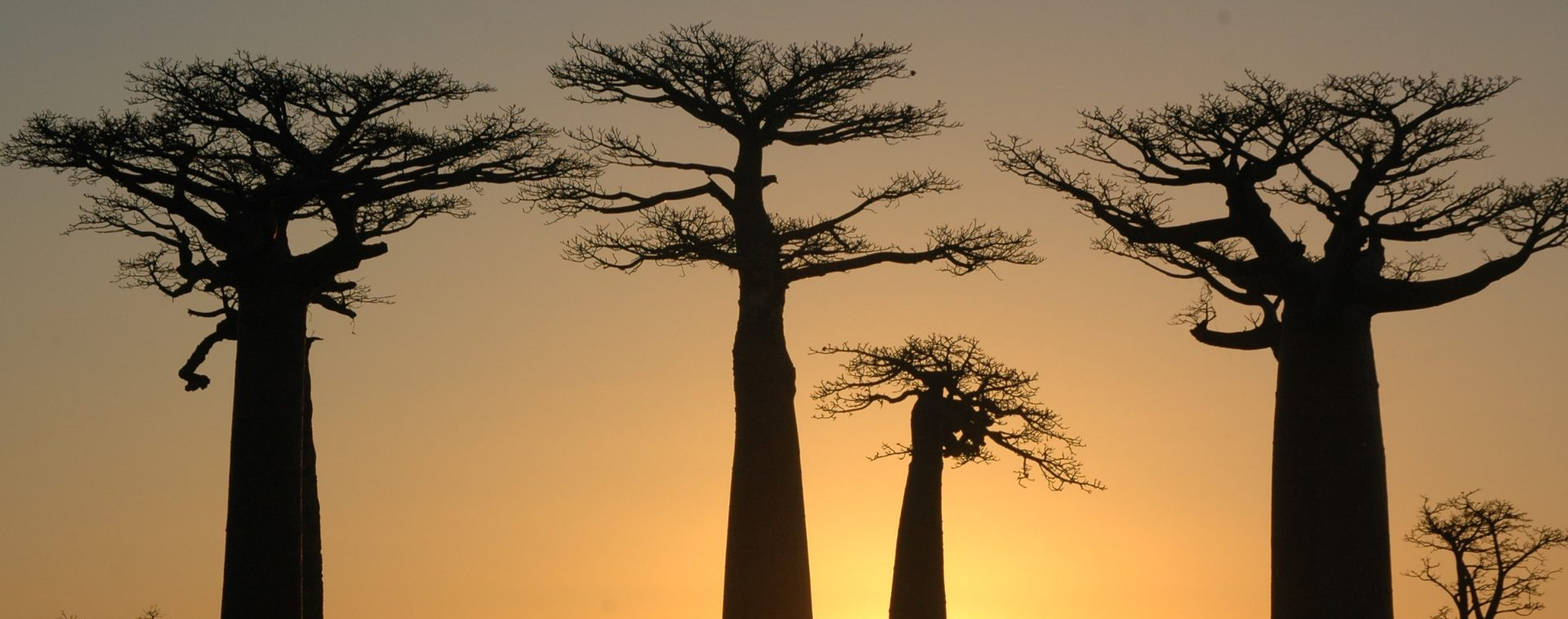 Madagascar - Route du Sud - Les matins du monde