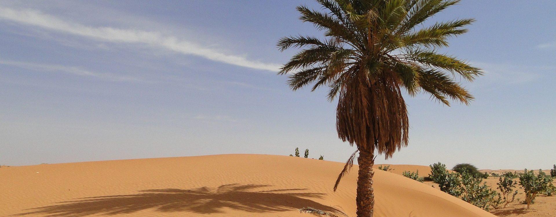 Mauritanie - Les Matins du Monde