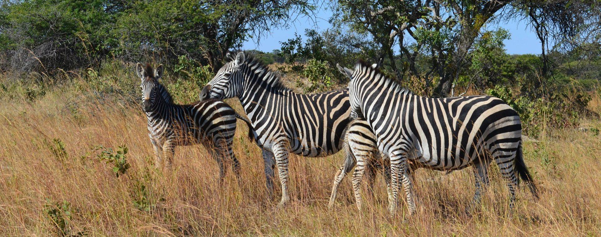 Zimbabwe - D'Harare aux Chutes Victoria - Les matins du monde