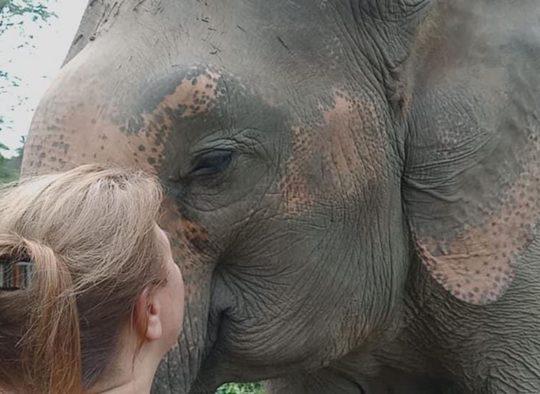 Autriche - Grossvenediger : ascension et traversée du massif