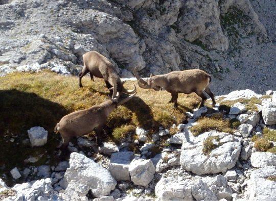 Slovénie - Découverte du Triglav - Vallées de la Soca et de Voje