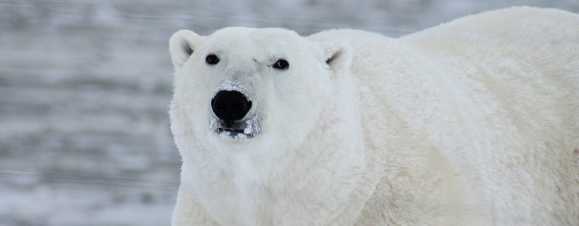 Spitzberg - Ski voile au pays des glaces et des ours - Les matins du monde