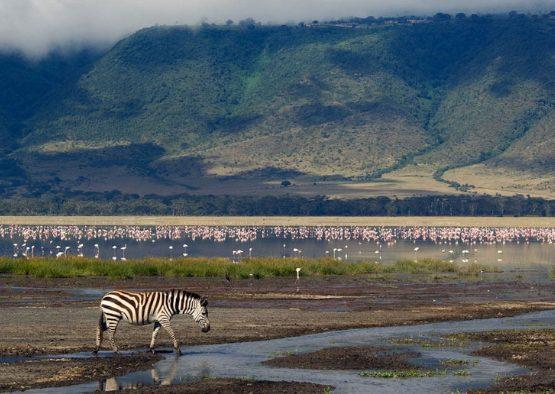 Tanzanie - La Grande Migration Serengeti Mara - Les matins du monde